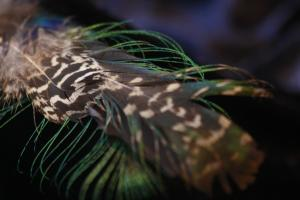 feather (1)